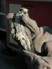 Tierrettung Falke